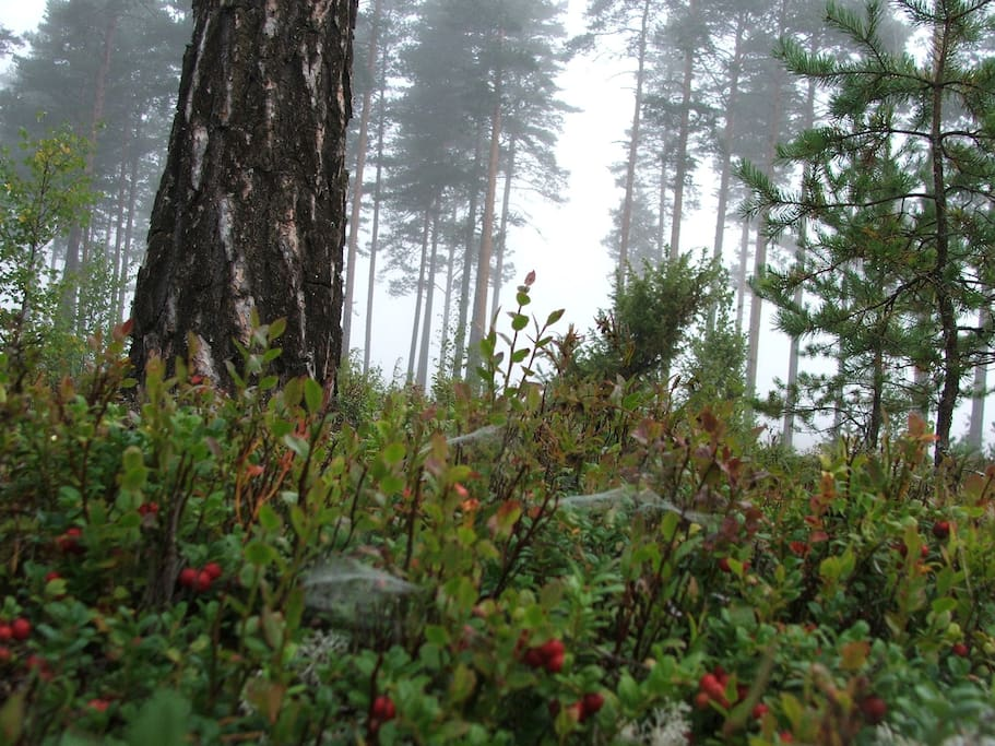 forest just behind the house, early morning mist before the hot sun of summertime rises