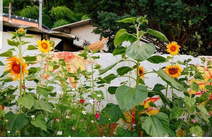 stay in gonggan-담양(햇살 따스한 방) Airbnb에 소개된 그 집!!