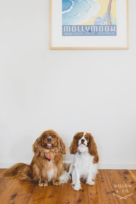 Regular visitors to Hank's, Rupert and Lola!