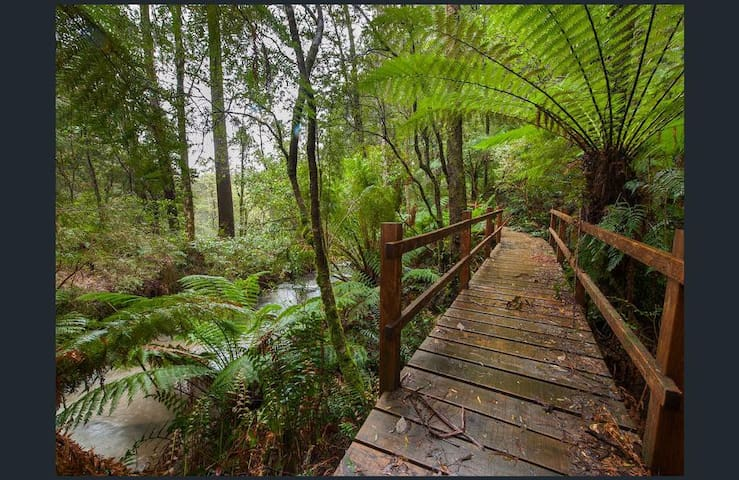 Follow the path, decks and bridges to explore acres of pristine ancient rainforest protected in this private property.
