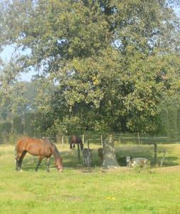de Luythoeve - Meeuwen-Gruitrode
