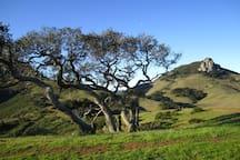 View from Felsman Loop Trail