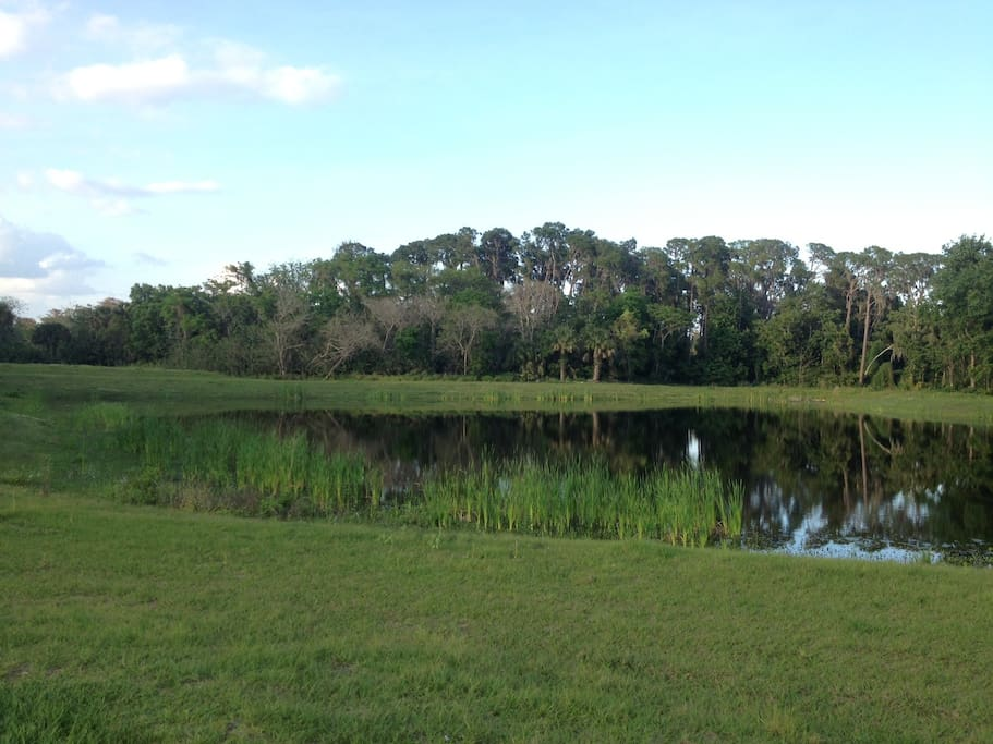 Lake in back yard.  Private.... relaxing...  Great birdwatching.  Lots of peace in the heart of the City of Eustis!