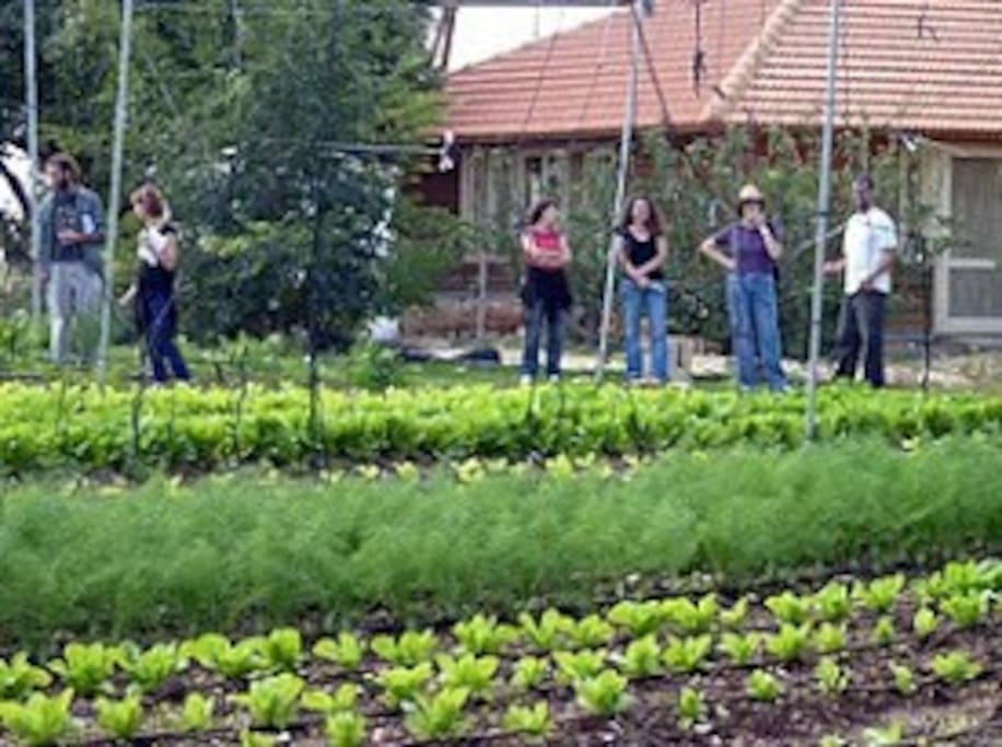 in the home organic Garden