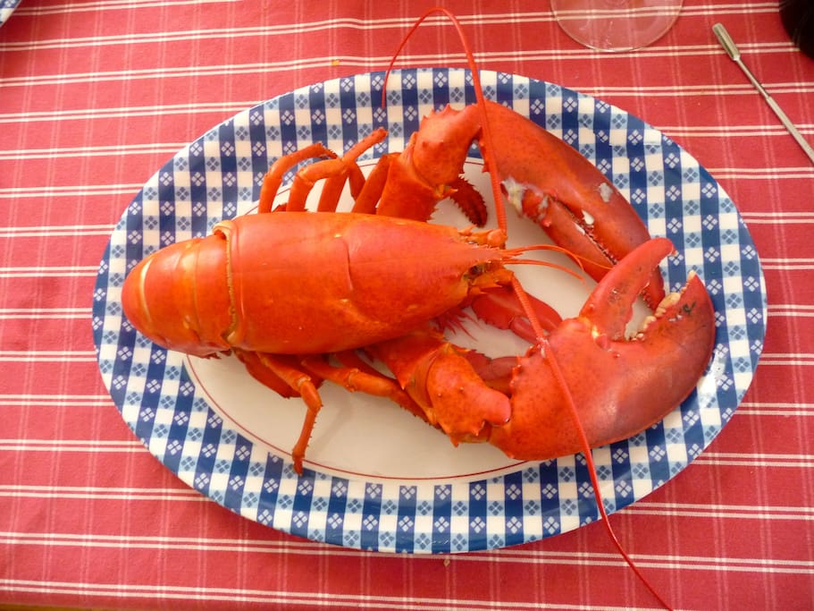 eat lobster!