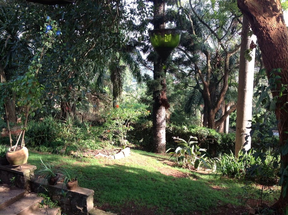 Tall trees and Turacos - view from the deck