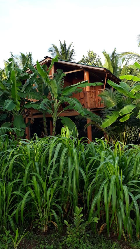 Sigiri Aliya Tree house