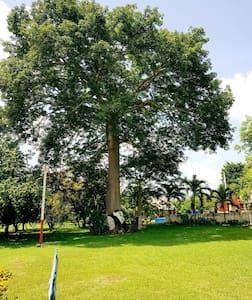 El palmar Hkan