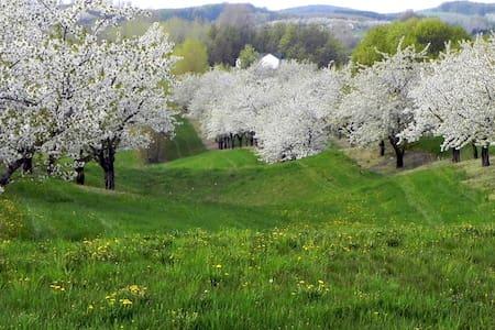Retreat in Nature - วิลเลียมสเบิร์ก - บ้าน
