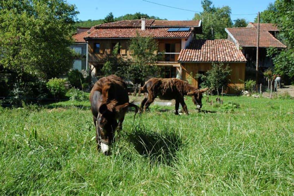 Tournant le dos au gîte, les ânes Nénesse et Princesse vous attendent dans l'espace naturel