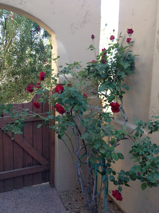 Front entrance in private courtyard!