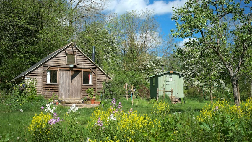 Rustic, charming cabin in woodland - Somerset - Bed & Breakfast