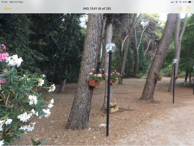 Villa amongst pine woods and 200m from the beach