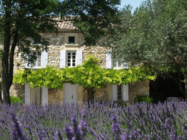 L'Estivaliere, between vines and lavender