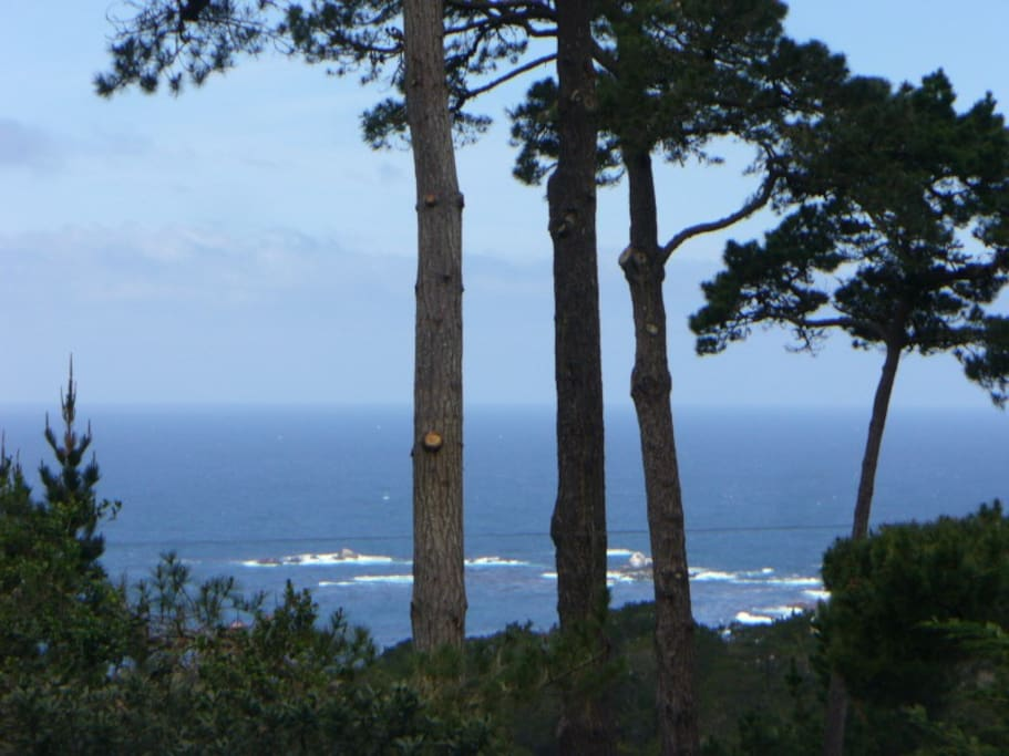 Zoomed in view from the Bed ~ Devil's Cauldron, Point Lobos State Park.
