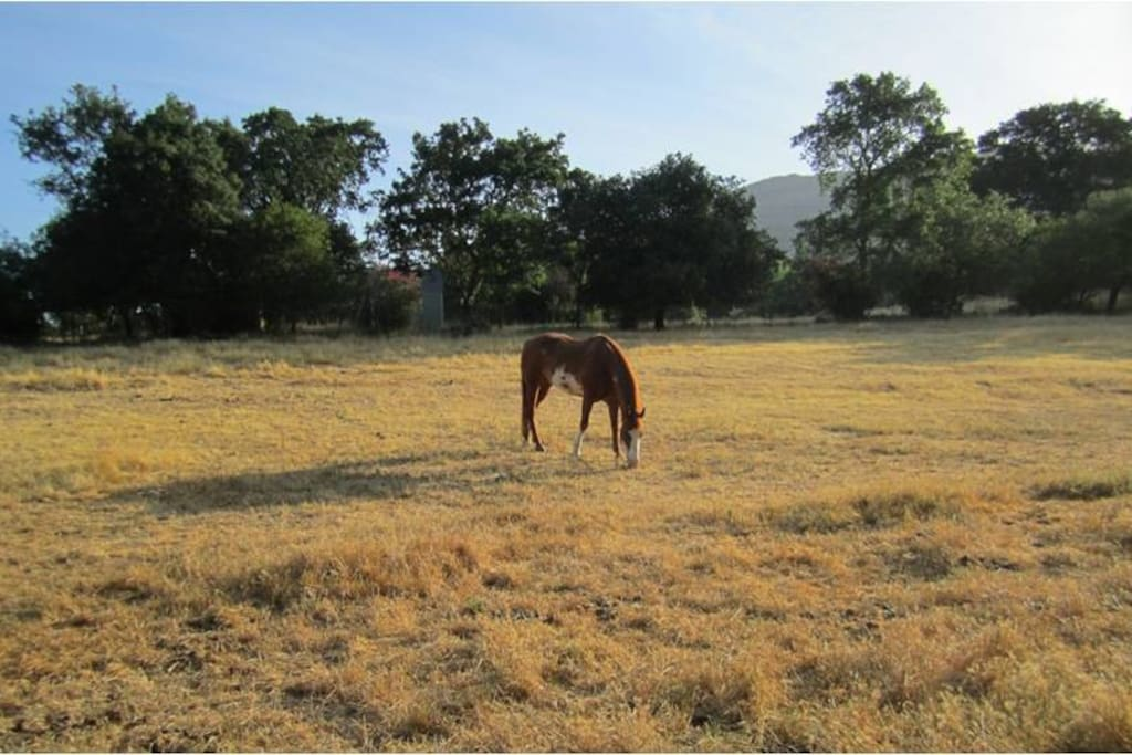 Open horse pasture in the front of the property
