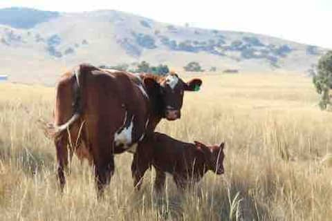Pyrenees Farm Stay B&B. Pet friendly.Entire Cabin