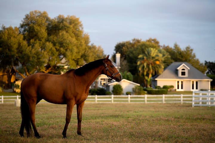 Luxury Equestrian GREAT HOUSE - Ocala - House