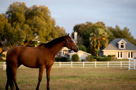 Luxury Equestrian GREAT HOUSE - Ocala - Hus