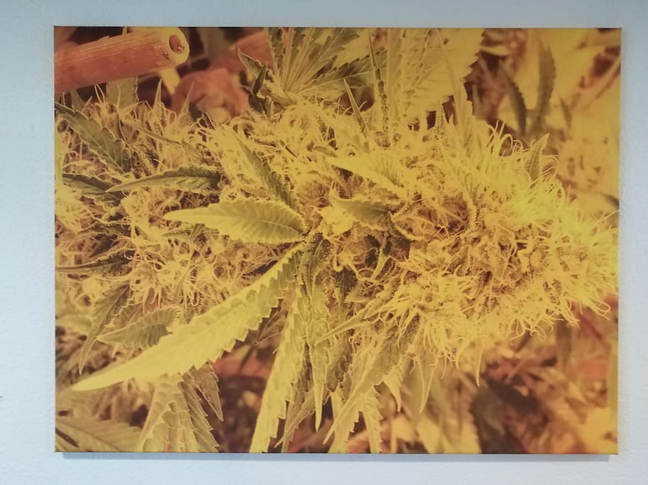 Marijuana-themed artwork everywhere!