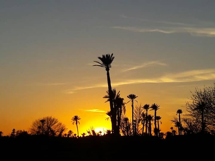 Sunset in the palms area