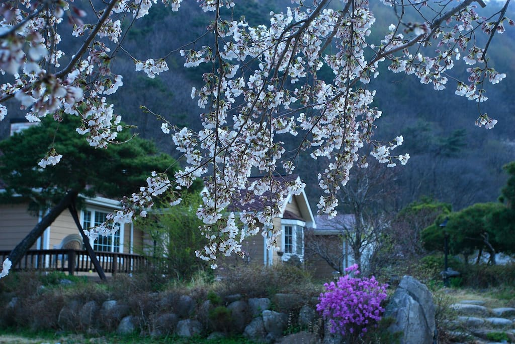 봄 전경2 (Spring)