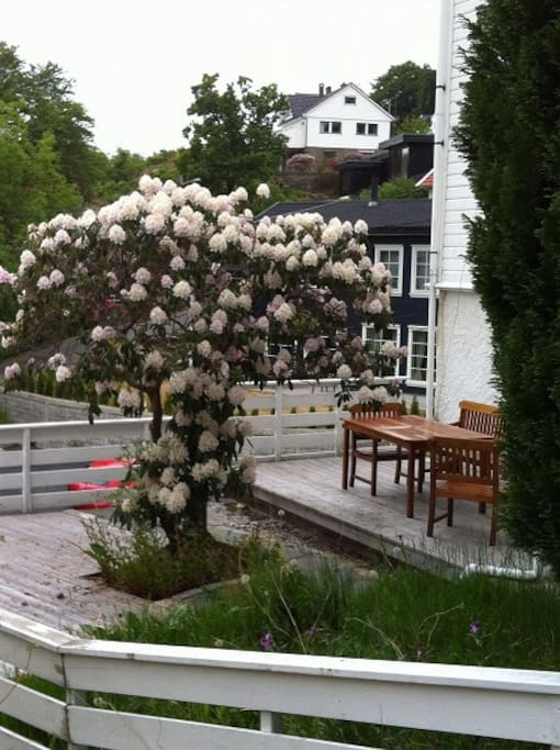 terrace with  rhododendron in bloom in May/June