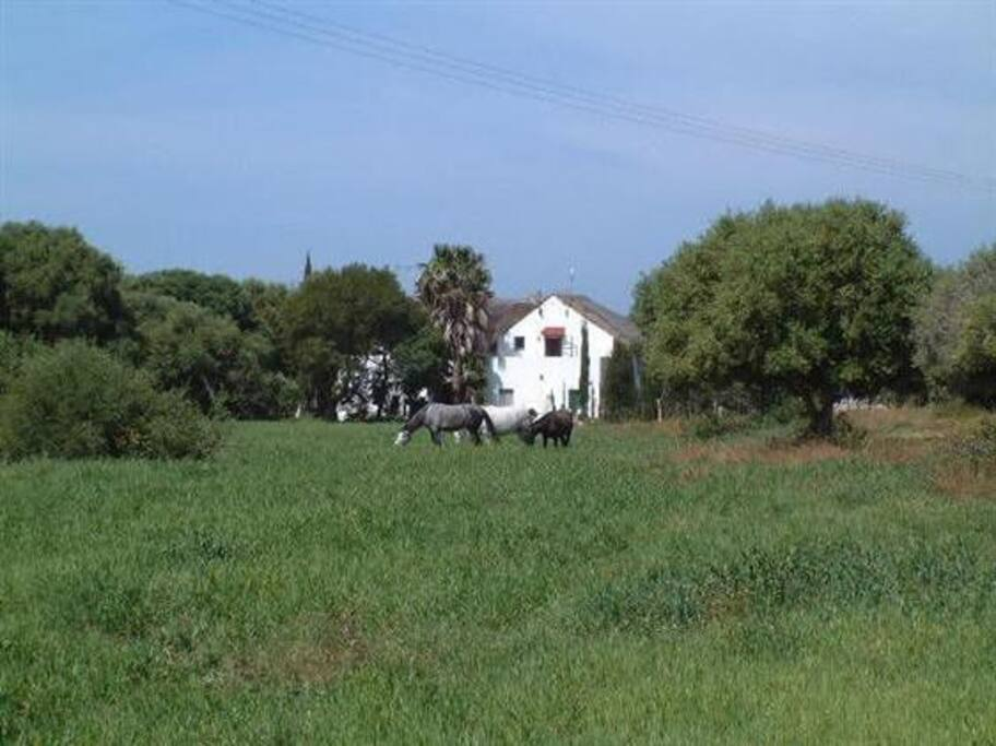 El Cortijo - The house seen from the neighbouring field