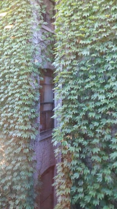 Ivy views!