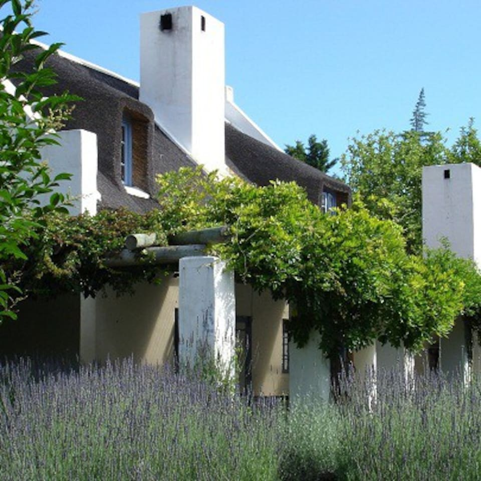 Quaint thatch cottage surrounded by swathes of lavender