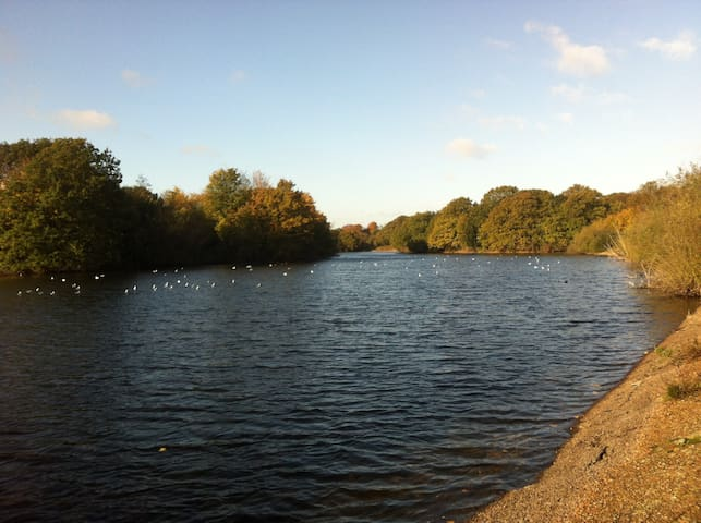 One of the many lakes in Wanstead Park
