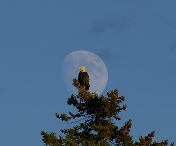 Bald Eagle sightings are common!