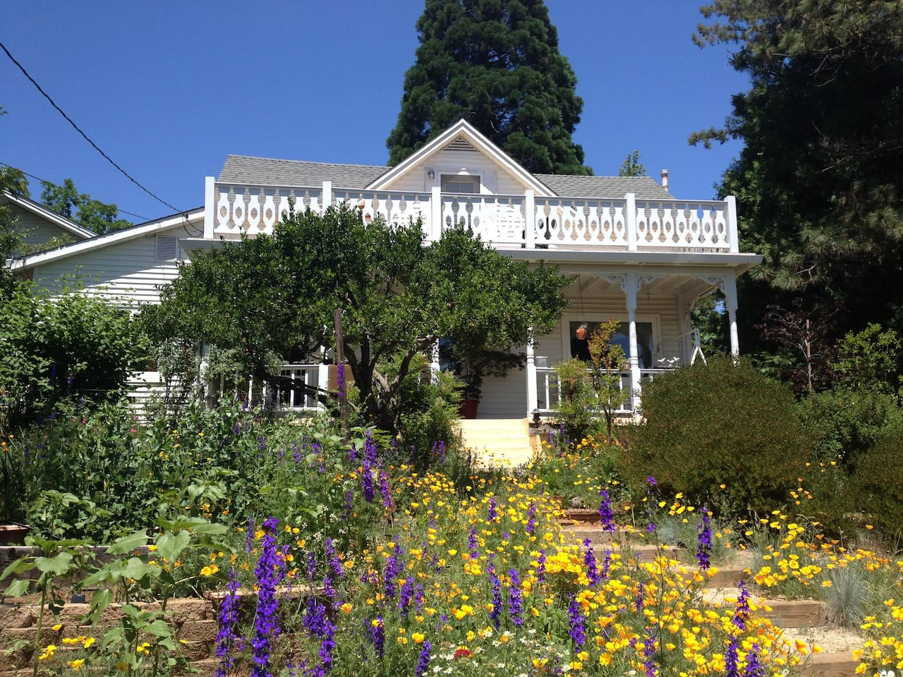 Oh, glorious spring poppies and larkspur. The entire upstairs and porch is all yours.