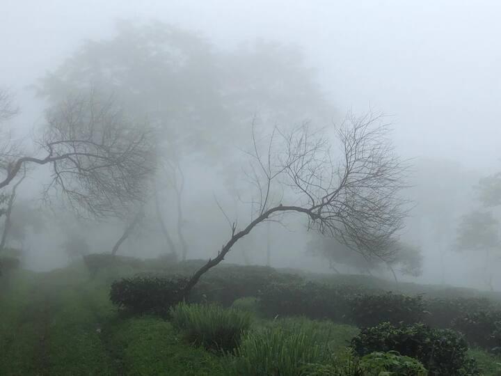 Tea Forest-Samabeong