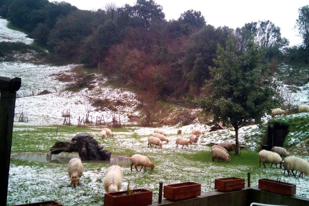 !Idilico! esta vez nevó