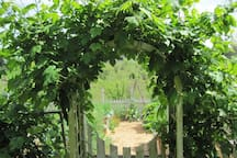 Vegetable garden gate.