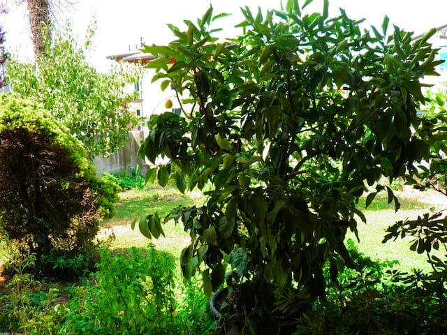 The Lemon Garden - Santa Giustina In Colle - Hus