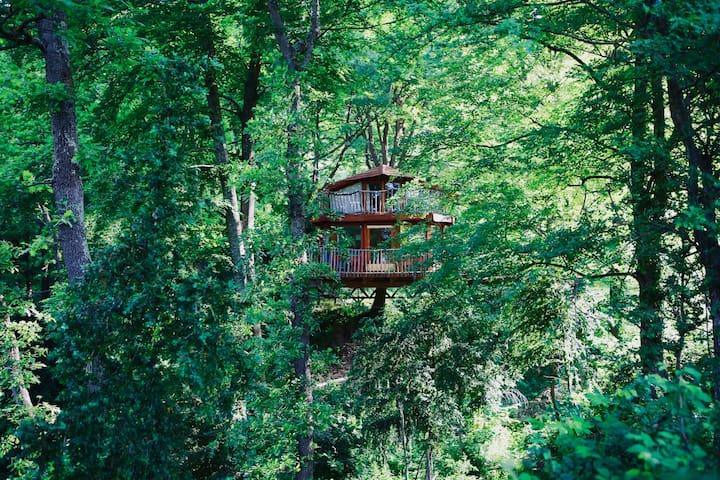 La cabana a l'arbre del Vilaro. Tree House.
