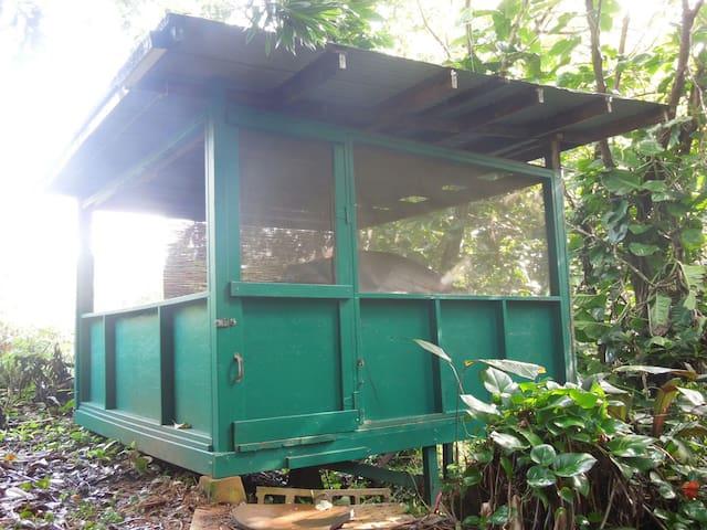 Hana Organic Farm Cabins and Camping - Hale Ali'i - Hana - Cabin