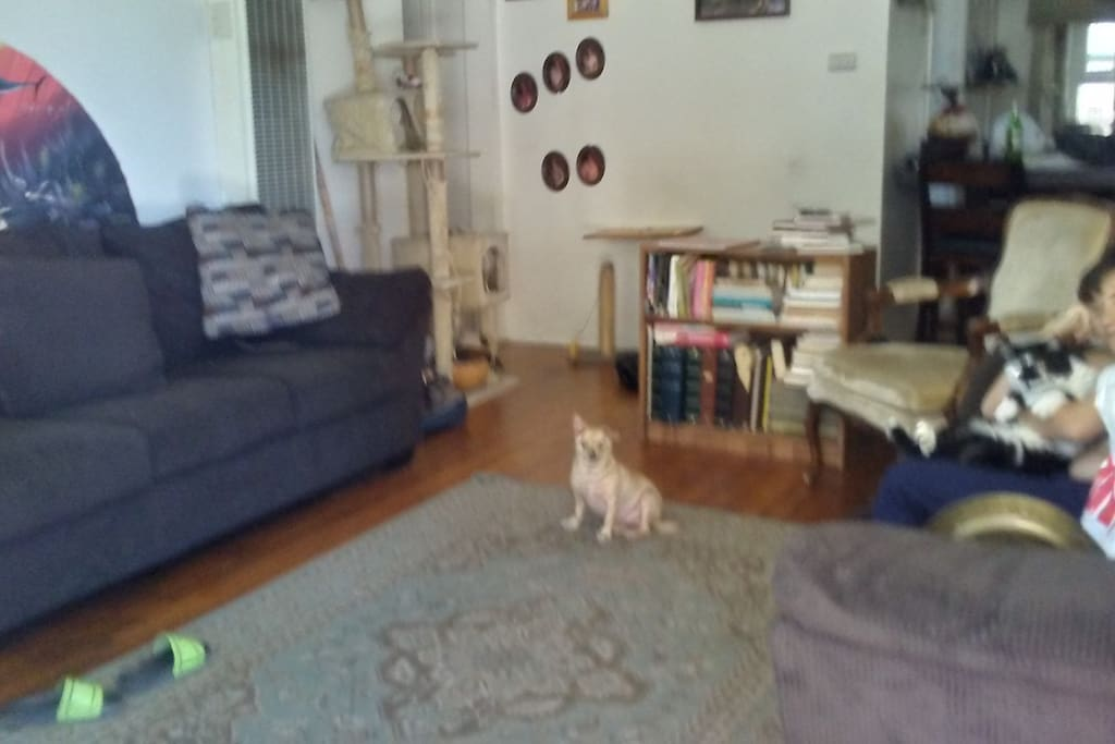 Living Room (Skippy (dog)