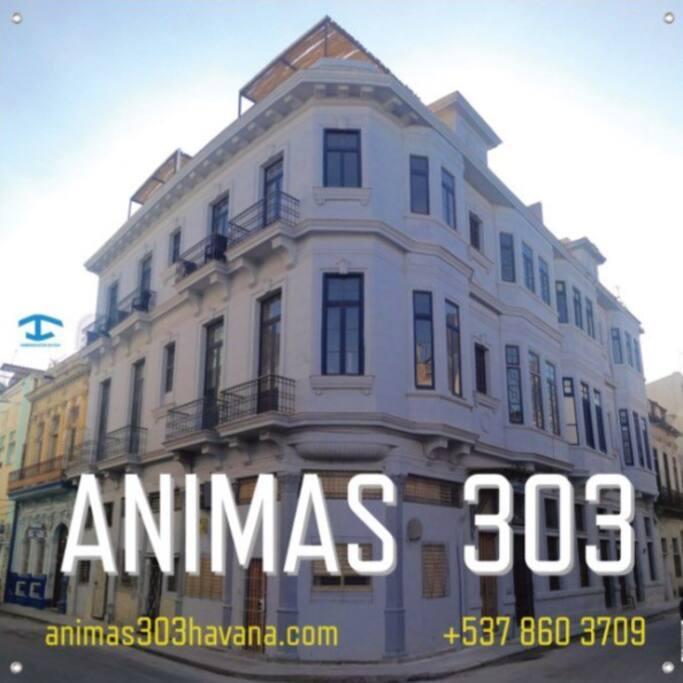 Animas 303