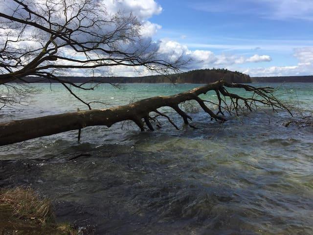 Urlaubsgrüße vom Stechlinsee (Franz)