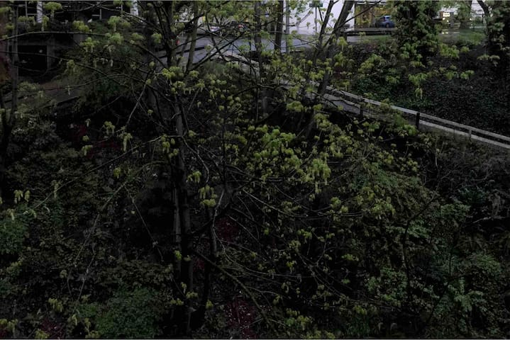 Forest view in a downtown 9th floor condo