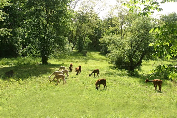Barron hill alpacas farm stay pasture view wohnungen zur for Alpacas view farm cuisine