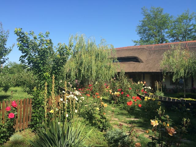 Traditional rooms and boat trips in Danube Delta - Murighiol