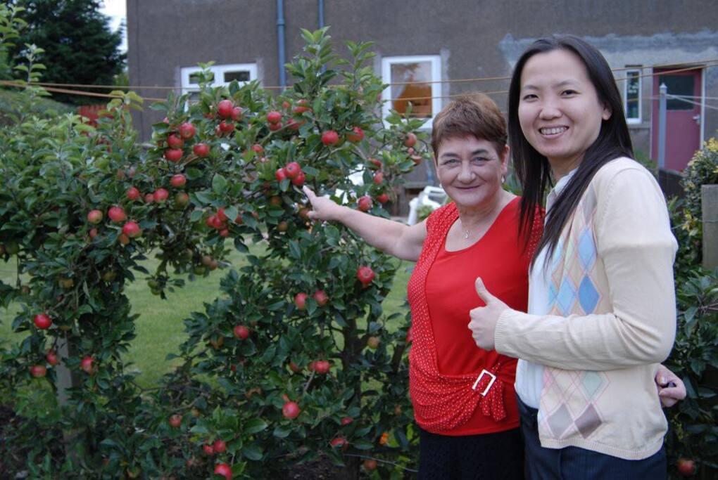 Apple trees in the back garden.