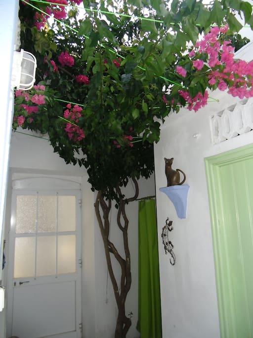 additional alfresco shower under the bourgainvillia