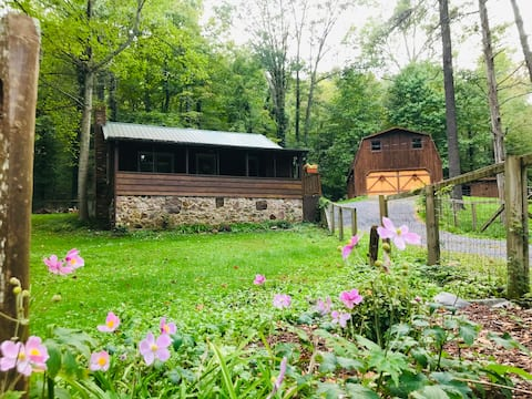 Woodpecker Cabin next to National Forest/hiking