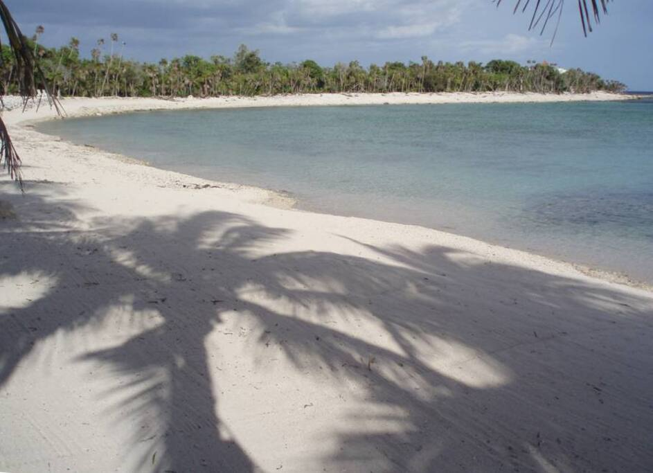 palm tree shadow play
