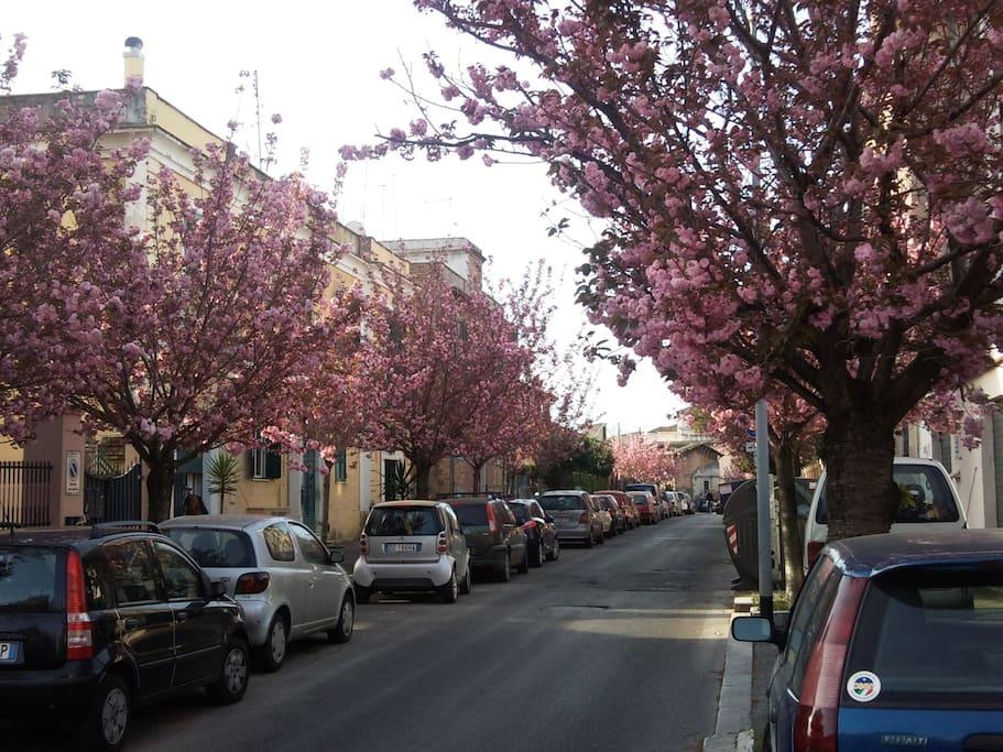 spring in Via dei Ciceri